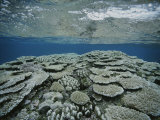 An Underwater View of Coral on Rongelap Reef Photographic Print by Bill Curtsinger