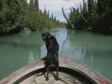 A Black Labrador Dog Travels up the Kenai River on a Boats Bow Photographic Print by Joel Sartore