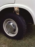 Kitten on Tire, in Wheel Well of Vehicle Photographic Print by Medford Taylor