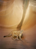 Mountain Lion on Rock Formation Photographic Print by Norbert Rosing