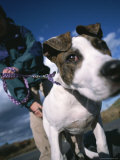 Close View of a Dog on a Leash with its Owner Photographic Print
