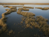 This Marshy Landscape Stretches as Far as the Eye Can See Photographic Print by Bates Littlehales