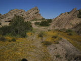 Yellow Wildflowers Lead to the Vasquez Rocks Photographic Print by Stephen St. John