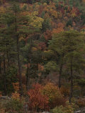 Autumn Colors Paint a Beautiful Fall Forest Landscape Photographic Print by Bates Littlehales