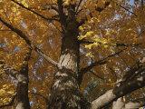 A Tree Trunk Surrounded by Yellow Autumn Leaves Fotografisk trykk av Stephen St. John