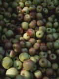 Dappled Light Across a Bin of Fresh-Picked Apples Photographic Print by Stephen St. John