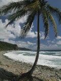 A Lone Palm Tree Grows from the Rocky Shoreline Photographic Print by Michael Melford
