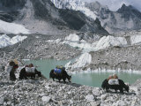 Yak herders cross a high pass near Mount Everest, Nepal Lámina fotográfica por Bobby Model
