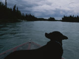A Black Labrador Dog Travels up the Kenai River on a Boats Bow Photographic Print by Joel Sartore