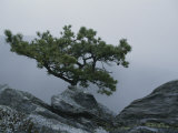 A Pine Tree Clings to a Rocky Ridge Overlooking the Shenandoah Valley Photographic Print
