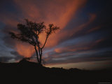 A Silhouetted Tree Set against a Brilliant Sunset Photographic Print by Bobby Model