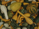 An Assortment of Gourds Photographic Print