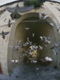 A Flock of Pigeons Fly out of an Arched Passageway in Siena, Italy Photographic Print by Raul Touzon