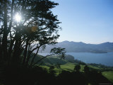 Sun Through Trees with Rolling Fields Overlooking Otago Peninsula Photographic Print