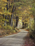 A Road Dappled with Sunlight Filtering Through the Surrounding Trees Photographic Print by Medford Taylor
