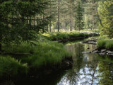 A Stream Wanders Through a Lush Taiga Forest Fotografisk tryk