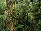 Rain Forest Tree with Bromeliad Plants, Costa Rica Photographic Print by Michael Melford