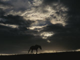 A Wild Horse is Silhouetted under Ominous Storm Clouds Photographic Print by Raymond Gehman