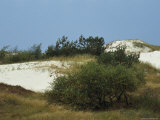 Sand Dunes and Dune Plants Photographic Print by Norbert Rosing