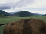 A Bison Walks Through Fields on the Side of Bighorn Scenic Byway Photographic Print