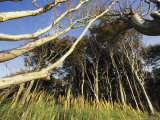 Grove of Trees Growing as a Windbreak Photographic Print by Norbert Rosing