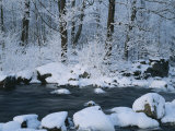 A Stream Running Through Snowy Woodland Photographic Print by Mattias Klum