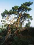 Scenic with Fir Trees, Muritz National Park, Germany Photographic Print by Norbert Rosing