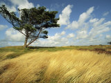 Heathland on the Island of Hiddensee in the East Sea Photographic Print by Norbert Rosing