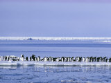 Adelie Penguins, Pygoscelis Adeliae, Cluster Together on an Ice Floe Photographic Print by Bill Curtsinger