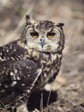 Close View of an Eagle Owl Photographic Print by Kenneth Garrett