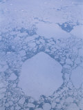 Aerial of Icebergs and Other Ice Chunks off the Antarctic Peninsula Photographic Print by Gordon Wiltsie