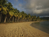 Palm Trees Line a Beach in the Dominican Republic Photographic Print by Raul Touzon