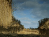 Reflection of a Blue Sky in a Stream Bordered by Grasses Photographic Print by Mattias Klum