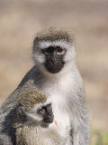 A Close View of a Vervet Monkey and Her Baby Photographic Print by Kenneth Garrett