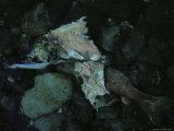 Salmon Carcass, Clayoquot Sound, Vancouver Island Fotoprint van Joel Sartore