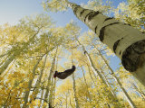 Woman in Hammock in Aspen Trees Photographic Print by Dugald Bremner Studio