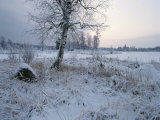 Winter Scene with Snow-Covered Grasses and Tree Next to Frozen Stream Photographic Print by Mattias Klum