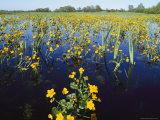 Spring Flood Plains with Wildflowers Photographic Print by Norbert Rosing