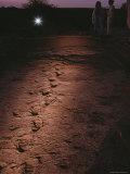 Fossilized Tracks Left by Primates 3.6 Million Years Ago Fotografisk tryk af Kenneth Garrett