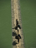 A Tibetan Packer and His Horses Cross a Wooden Footbridge Photographic Print by Dugald Bremner Studio