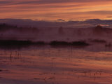 A Lake in a Bog Reflects the Early Morning Sky Photographic Print by Mattias Klum