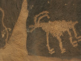 Petroglyphs, Animal Rock Art Photographic Print by Rich Reid