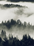Early Morning Sun on a Foggy Redwood Valley Photographic Print by Rich Reid