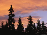 Silhouetted Evergreen Trees at Twilight under a Cloudy Sky Photographic Print by Heather Perry