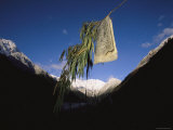 A Prayer Flag Hangs from a Branch Photographic Print by Steve Winter