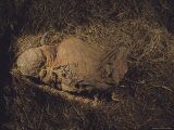 The Cloth Wrapped Skeleton from a Plant-Filled Peruvian Mummy Bundle Photographic Print by Ira Block
