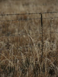 Dew Clings to a Fence in a Field of Autumn Brown Grasses Photographic Print