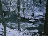 A Creek Rushes by in a Snow-Covered Forest Photographic Print by Stephen Alvarez
