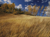 Autumn Meadow Scene Photographic Print by Raymond Gehman