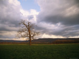 A Leafless Tree Stands in a Field Below the Cumberland Plateau Photographic Print by Stephen Alvarez